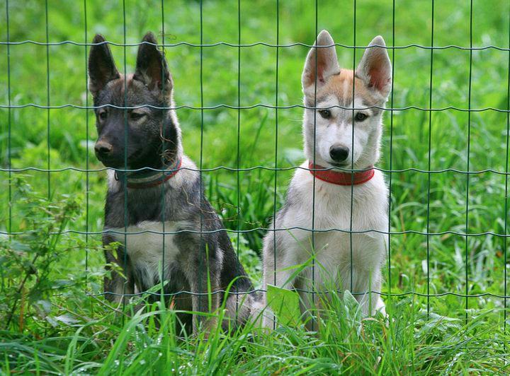 Rymma ja Rocco