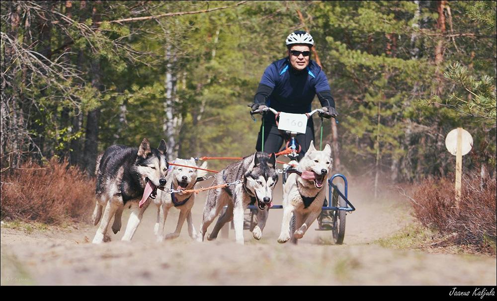 Racedog Cup 2014