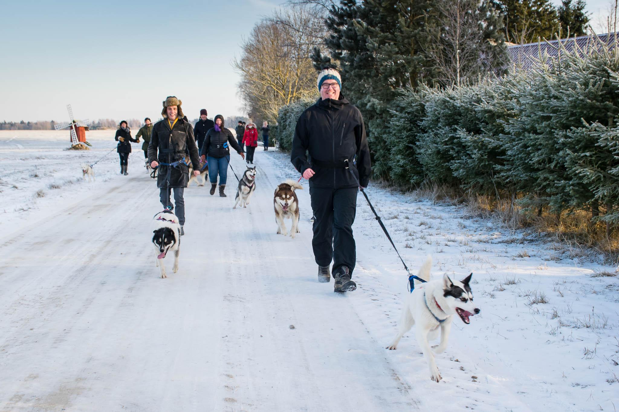 Hellerkantri Huskypark kelgukoerte jalgsimatk Raplamaal
