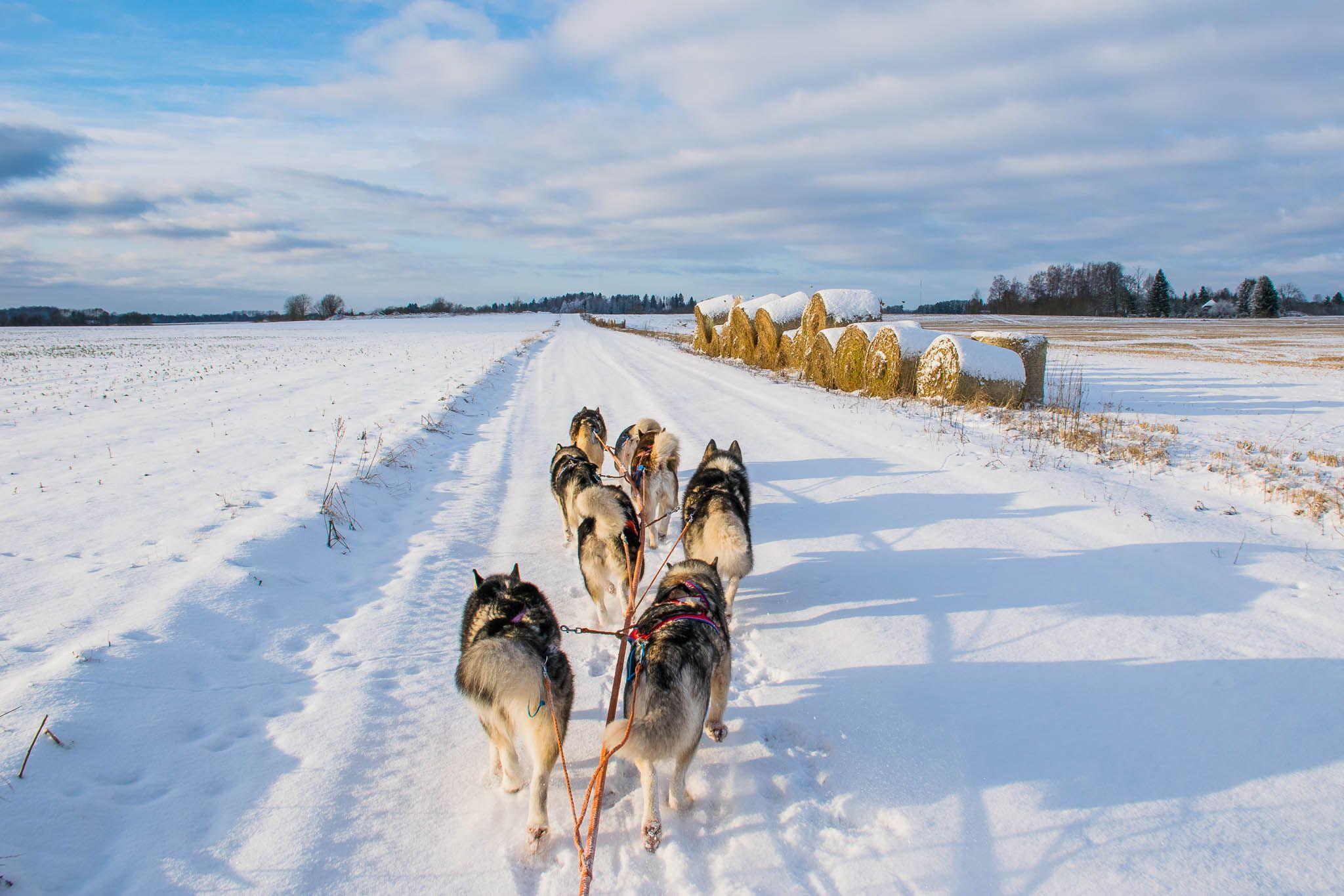 Kelgukoerte rakendisõit Hellerkantri Huskypargis Raplamaal