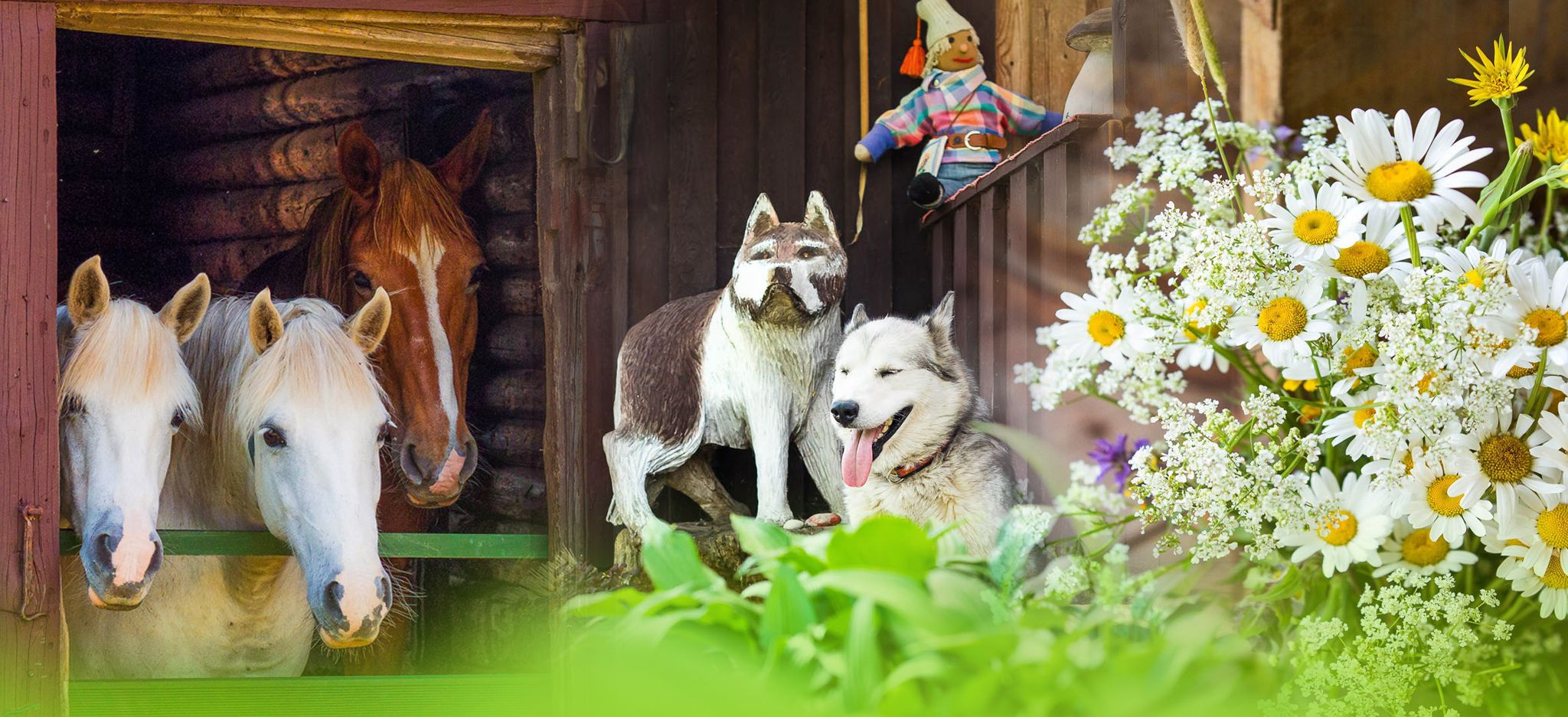 Visit family owned sled dogs and agri farm in Estonian